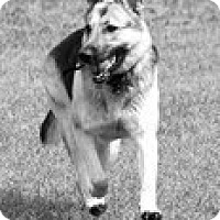 Adopt A Pet :: Nala - Knoxville, TN