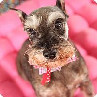 Adopt A Pet :: Juanita - Springfield, MO