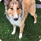 Adopt A Pet :: Jennie