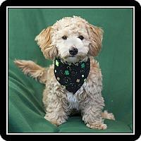 Adopt A Pet :: Patrick - San Dimas, CA