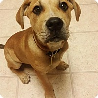 Adopt A Pet :: NICK - pending - Morgantown, IN
