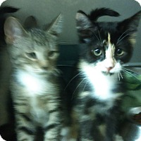 Adopt A Pet :: Cali - Whitestone, NY