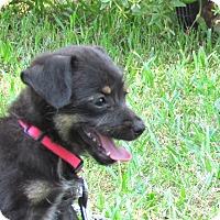 Adopt A Pet :: CHARM - Bedminster, NJ