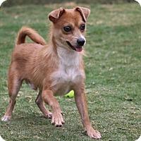 Adopt A Pet :: Palmer - Pinehurst, NC