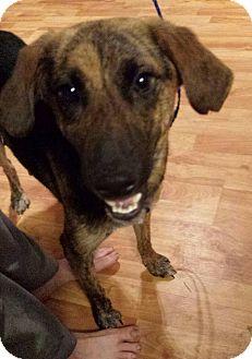 Adopt A Pet :: Peaches  - Snow Hill, NC