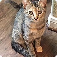 Adopt A Pet :: Glenda - Houston, TX