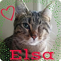 Adopt A Pet :: Elsa - Grand Blanc, MI