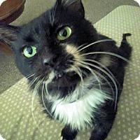 Adopt A Pet :: Pearson - Troy, MI