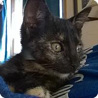 Adopt A Pet :: Sabrina - Wamego, KS