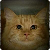 Adopt A Pet :: Katnip - Pueblo West, CO