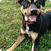 Adopt A Pet :: Harvey - Macomb, IL