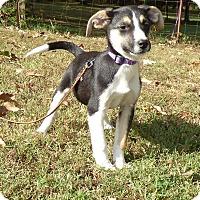 Adopt A Pet :: Tony - Newburgh, NY