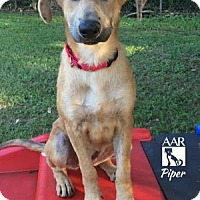 Adopt A Pet :: Piper - Tomball, TX