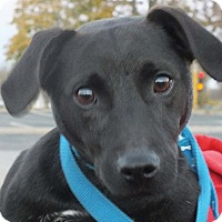 Terrier (Unknown Type, Medium) Mix Dog for adoption in Minneapolis, Minnesota - Lil Jay