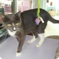 Adopt A Pet :: Tropicana - Englewood, FL