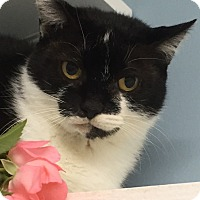 Adopt A Pet :: Delilah; watch my video here! - Manchester, NH