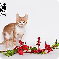 Adopt A Pet :: Jack - Tomball, TX
