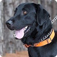 Adopt A Pet :: Duke - Minneola, FL