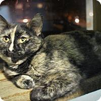 Adopt A Pet :: Skylark - West Des Moines, IA