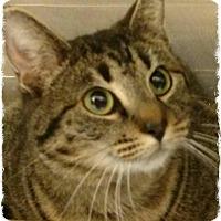 Adopt A Pet :: Gladys - Pueblo West, CO