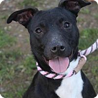 Adopt A Pet :: TAZ - Red Bluff, CA