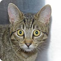 Adopt A Pet :: Ewok - Pleasanton, CA
