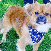 Adopt A Pet :: Peanut cutest boy - Sacramento, CA