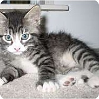 Adopt A Pet :: Derek - Shelton, WA