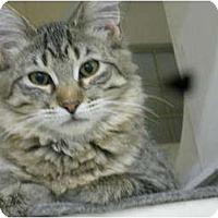 Adopt A Pet :: Molly - Chandler, AZ
