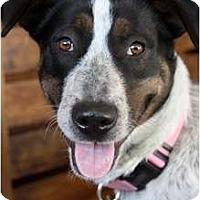 Adopt A Pet :: BESSIE - san diego, CA