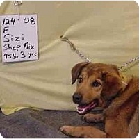 Adopt A Pet :: Sizi/Pending - Zanesville, OH