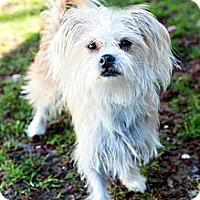 Adopt A Pet :: Brady - Tinton Falls, NJ