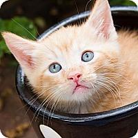 Adopt A Pet :: Kenny - Irvine, CA