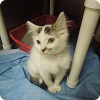Adopt A Pet :: Alexa - Medina, OH