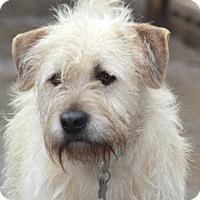 Adopt A Pet :: Ragsdale - Norwalk, CT