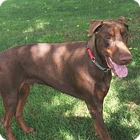 Adopt A Pet :: Leonardis - Arlington, VA