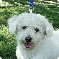 Adopt A Pet :: Harley - Walnut Creek, CA