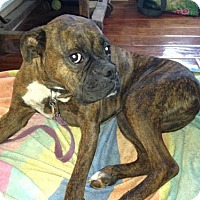 Adopt A Pet :: Clyde 2 - Woodinville, WA