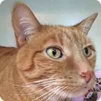 Adopt A Pet :: MOCHA - Hamilton, NJ