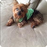 Adopt A Pet :: Jojo - Ocean Ridge, FL