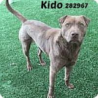 Adopt A Pet :: 282967 Kido - San Antonio, TX