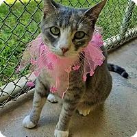 Adopt A Pet :: Tasha - Umatilla, FL