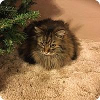 Adopt A Pet :: Simon Courtesy Post - Absecon, NJ