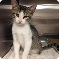 Adopt A Pet :: Picasso - East Brunswick, NJ