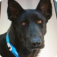 Adopt A Pet :: CLARA VON CLAUSTHAL - Los Angeles, CA
