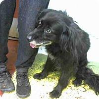 Adopt A Pet :: PEARL - Atlanta, GA
