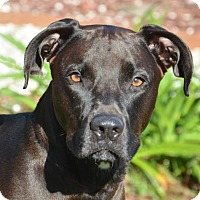 Adopt A Pet :: Zeus - Englewood, FL
