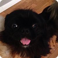 Adopt A Pet :: Reese - Ft. Lauderdale, FL