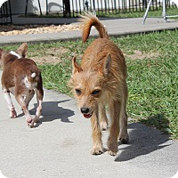 Adopt A Pet :: Benji! - Weeki Wachee, FL