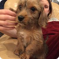 Adopt A Pet :: Ryan Murphy - Houston, TX